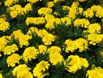 gele bloem, aard, de lente, bloemen, gebied, installatie, de groene zomer, flora, weide, tuin, mooie paardebloem, bloesem, schoon Stock Foto's