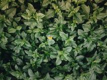 Gele bloem achter groene bladeren Stock Foto's