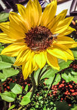 Gele bloem 2 bijen Royalty-vrije Stock Fotografie