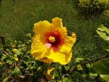 Gele bloem in de botanische tuin stock foto