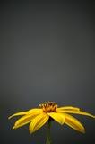 Gele bloem in de herfst Royalty-vrije Stock Afbeelding