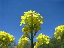 Gele bloem in de ochtend stock afbeeldingen