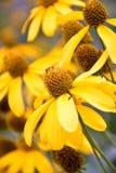 Gele bloem in de tuin stock fotografie