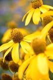 Gele bloem in de tuin royalty-vrije stock afbeelding