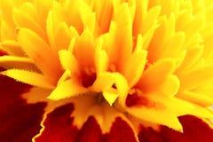 Gele bloem dichte omhooggaand Stock Afbeelding