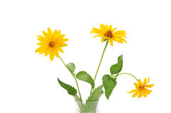 Gele bloem drie Royalty-vrije Stock Afbeelding