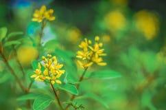 Gele bloem in een openluchtpark Stock Afbeelding