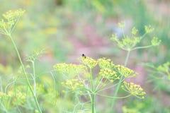 Gele bloem en bij Stock Foto