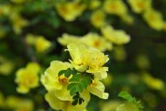Gele bloem en groen blad vector illustratie