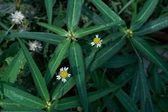 Gele bloem en groen gras royalty-vrije stock foto
