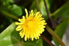 Gele bloem en mooi stock afbeelding