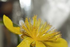 Gele bloem en slak Stock Foto