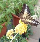 Gele bloem gele vlinder stock foto