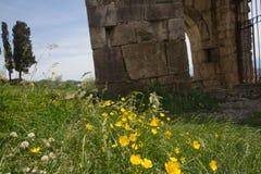 Gele bloem, groen grasgebied met oude tempel op de achtergrond stock afbeelding
