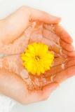 Gele bloem in handen Stock Afbeeldingen
