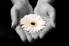 Gele bloem in handen Royalty-vrije Stock Afbeeldingen