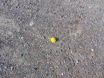 Gele bloem in het midden van de achtergrond van stenen en aarde royalty-vrije stock foto's