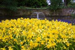 Gele bloem in het park Royalty-vrije Stock Foto's