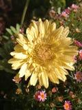 Gele bloem kleine roze bloemen stock afbeelding