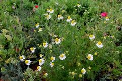Gele bloem met achtergrondaard Royalty-vrije Stock Afbeeldingen