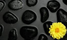 Gele Bloem met zwarte kuuroordkiezelstenen in water Royalty-vrije Stock Afbeelding