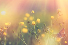 Gele bloem in nadruk - selectieve nadruk op gele bloem Royalty-vrije Stock Foto's