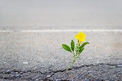 Gele bloem op barststraat stock foto's