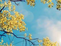 Gele bloem op boom stock foto's