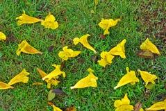 Gele bloem op de binnen tuin Royalty-vrije Stock Afbeelding