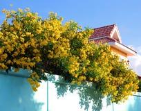 Gele bloem op groene muur Stock Fotografie