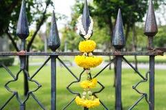 Gele Bloem op Rusty Fence Stock Foto's