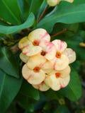 Gele bloem in tuin royalty-vrije stock fotografie
