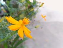 Gele bloem in tuin stock foto