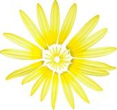 Gele bloem in wit 2 Stock Foto's