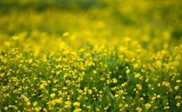 Gele bloemachtergrond Stock Afbeeldingen
