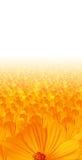 Gele bloemachtergrond royalty-vrije stock afbeeldingen