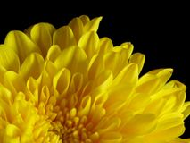 Gele bloemblaadjes stock afbeeldingen