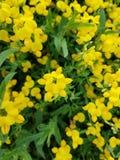 Gele bloembos Stock Foto's