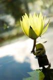 Gele bloemclose-up van de voorzijde Royalty-vrije Stock Foto's
