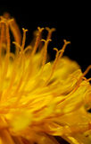 Gele bloemdetails Royalty-vrije Stock Foto's