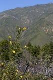 Gele bloemen Stock Fotografie
