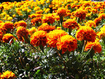 Gele bloemen stock afbeelding