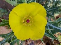 Gele Bloemen 1 stock foto's