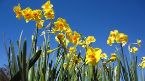 Gele bloemen stock footage