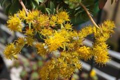 Gele bloemen Royalty-vrije Stock Afbeelding