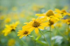 Gele bloemen. Royalty-vrije Stock Afbeelding