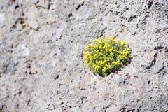 Gele bloemen Royalty-vrije Stock Foto