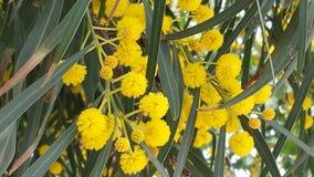 Gele bloemen Stock Afbeeldingen