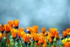 Gele bloemen. Stock Foto's