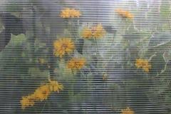 Gele bloemen als achtergrond Royalty-vrije Stock Afbeelding